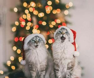cats, christmas, and light image