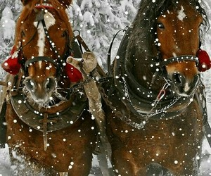 horses - winter - woods image