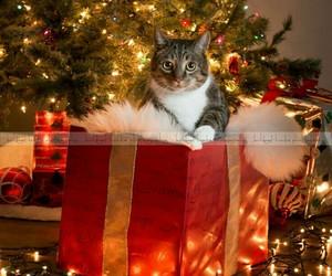christmas - cats image