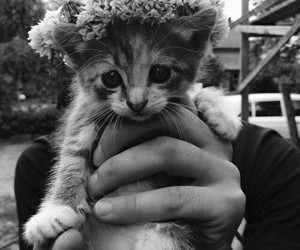 flowers, pet, and cat image