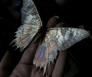 butterfly and grunge image