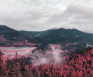forest, the 1975, and pink image