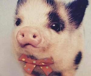 pig and animal image
