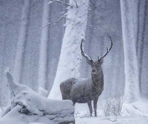 deer, nature, and snow image
