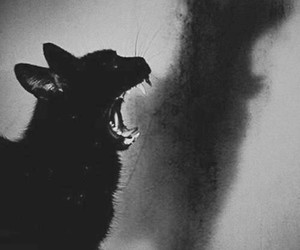 cat, black, and ombre image