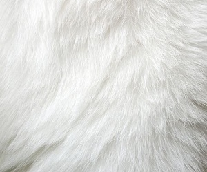 carpet, fluffy, and white image