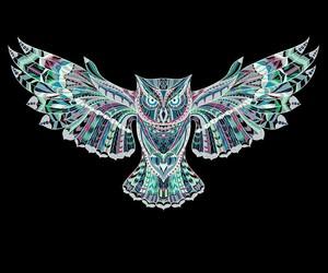cool, fun, and owl image