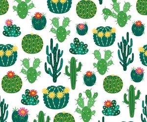 background, cactus, and succulent image