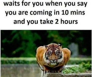 funny, funnypic, and tiger image