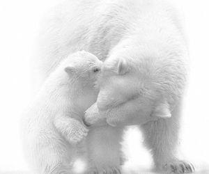 white, animal, and bear image