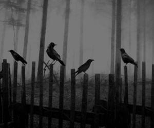bird, black and white, and dark image