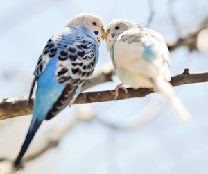 affection, animals, and birds image