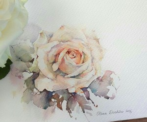 watercolor and rose image
