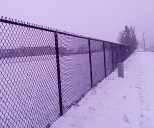 lavender, lilac, and snow image