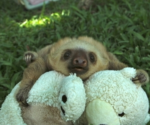 sloth, adorable, and Lazy image
