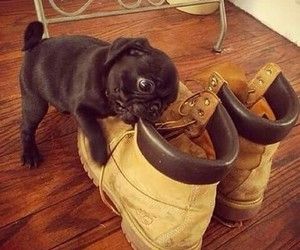 boots, dog, and timberland image