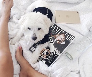 beautiful, pets, and weheartit image