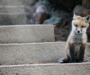 baby, fox, and cute image