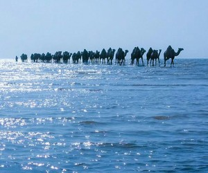 animal, camel, and sea image