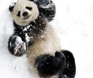 panda, snow, and animal image