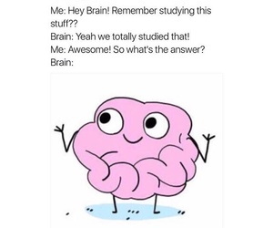 funny, meme, and brain image