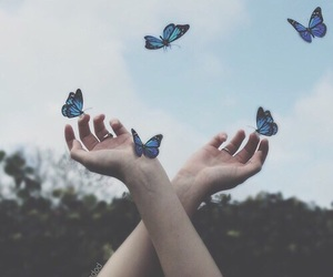 butterfly, blue, and aesthetic image