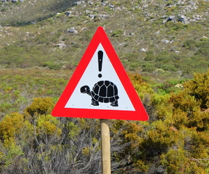 sign, south africa, and turtle image