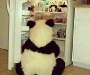 cool, food, and panda image