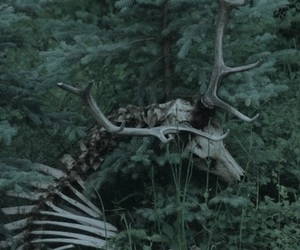 deer, forest, and skeleton image