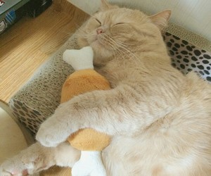 animal, cat, and fluffy image