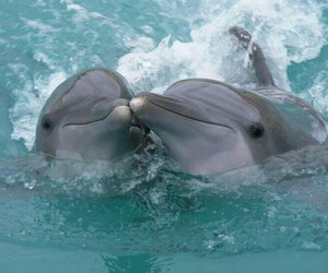 dolphin, animals, and summer image