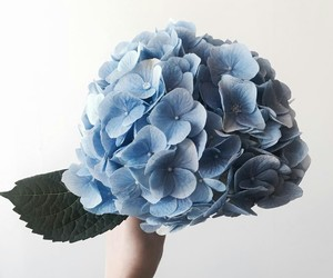 beautiful, blue, and bouquets image