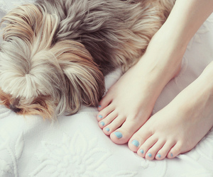 dog, puppy, and feet image