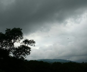 grey, nature, and photograph image
