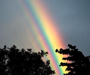 rainbow, nature, and tree image
