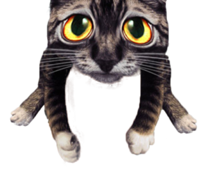 cat, filter, and png image