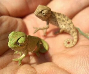 adorable, babies, and lizards image