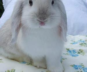 bunny, colors, and cute image
