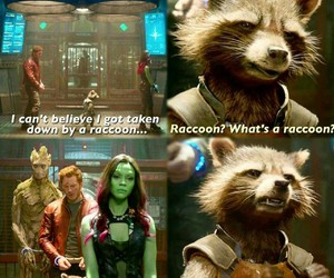 funny, Marvel, and rocket raccoon image