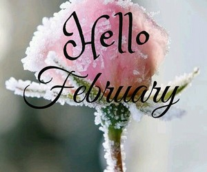 february, flower, and hello image