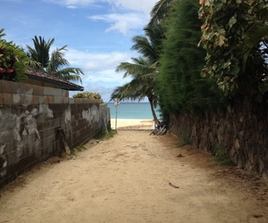 beach, sand, and tropical image