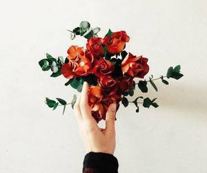 flowers, rose, and hand image