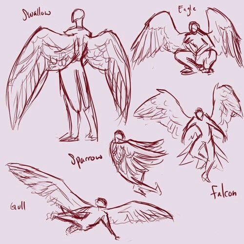 drawing and wings image