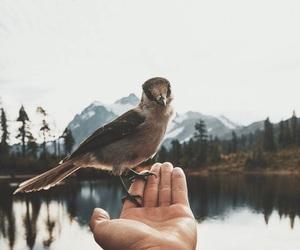 bird, nature, and animal image