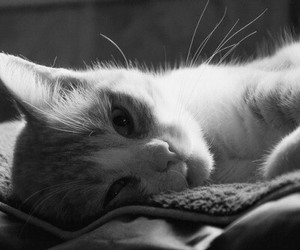 black, white, and cat image