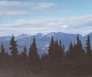 tree, mountains, and forest image