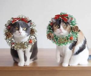 navidad, istchristmastime, and xmas image