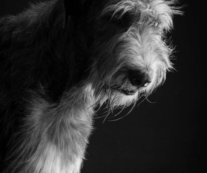 beautiful, black and white, and dog image