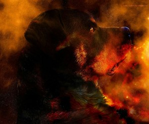 colors, dog, and rottweiler image
