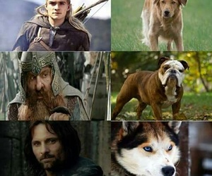 dogs and lord of the rings image